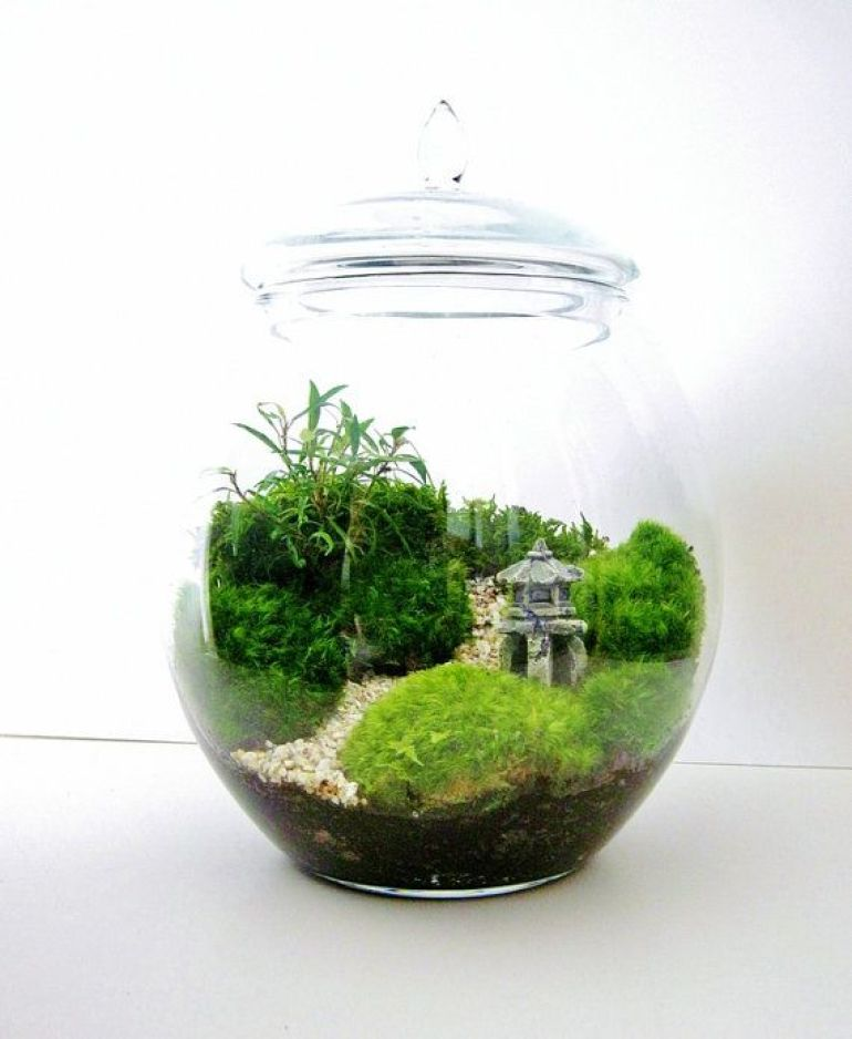 Incredible diy terrarium ideas for Japanese themed garden plants